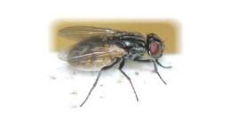 pestcontrol_058