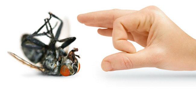 הדברת זבובים